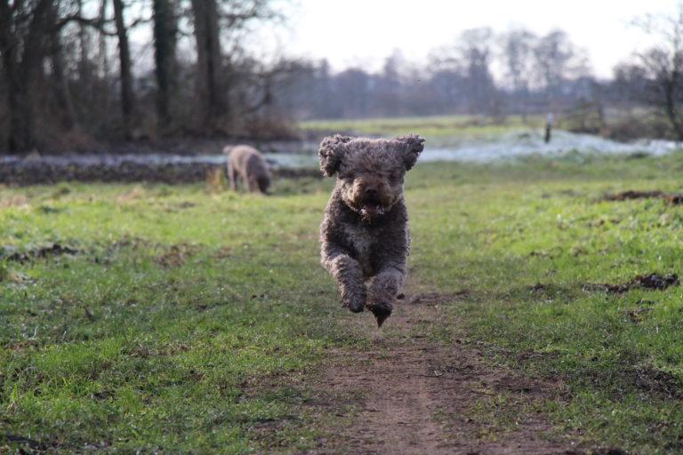 Amor-in-sprong-hondenwandeling