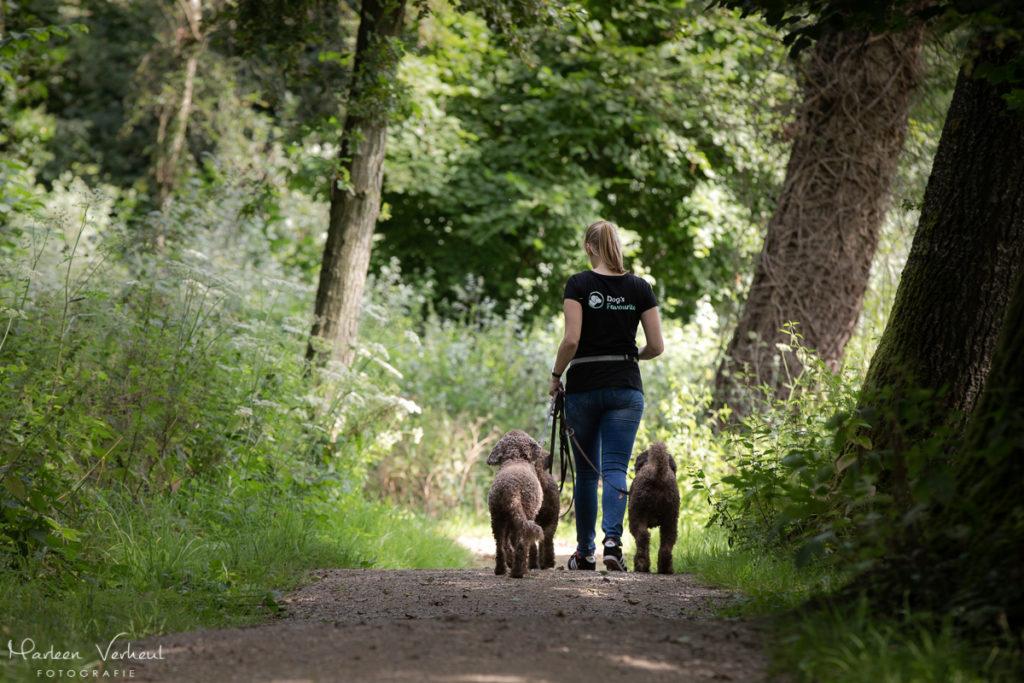 wandelen-met-honden-coaching