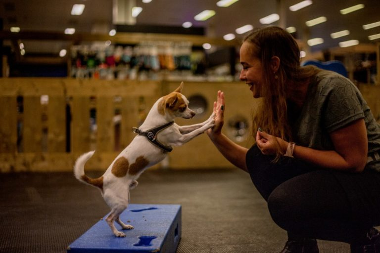 Funcursus Dog's Favourite hondenschool