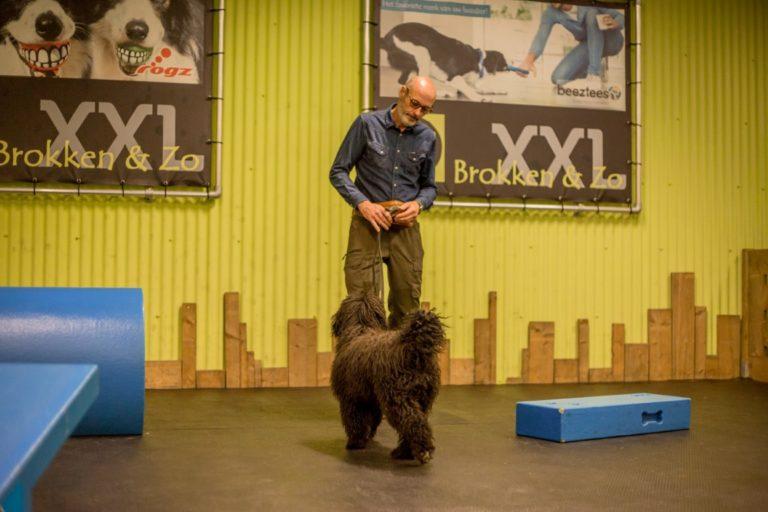 Basiscursus Dog's Favourite hondenschool