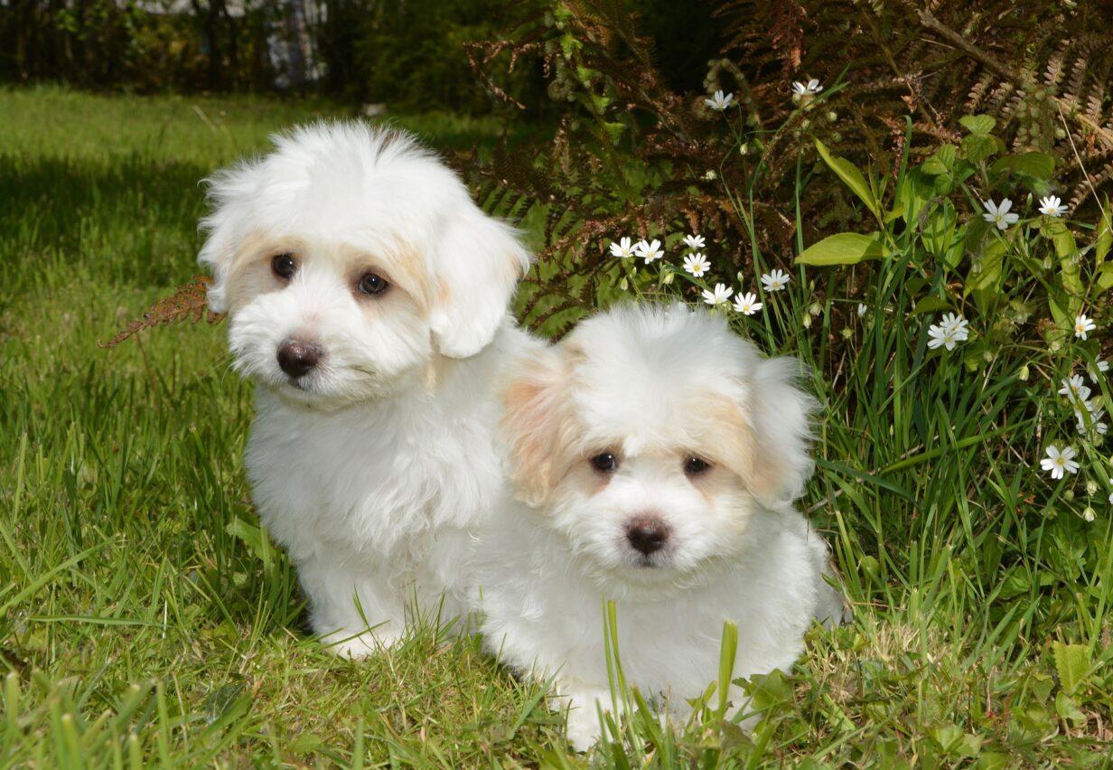twee-pups-zelfde-nest-ervaring-ashley